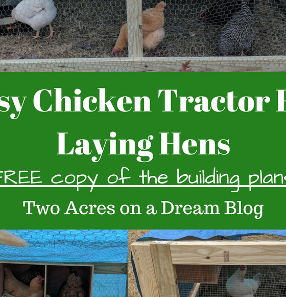 chicken tractor for laying hens