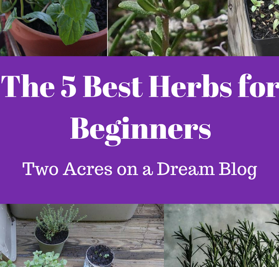 five best herbs for beginners