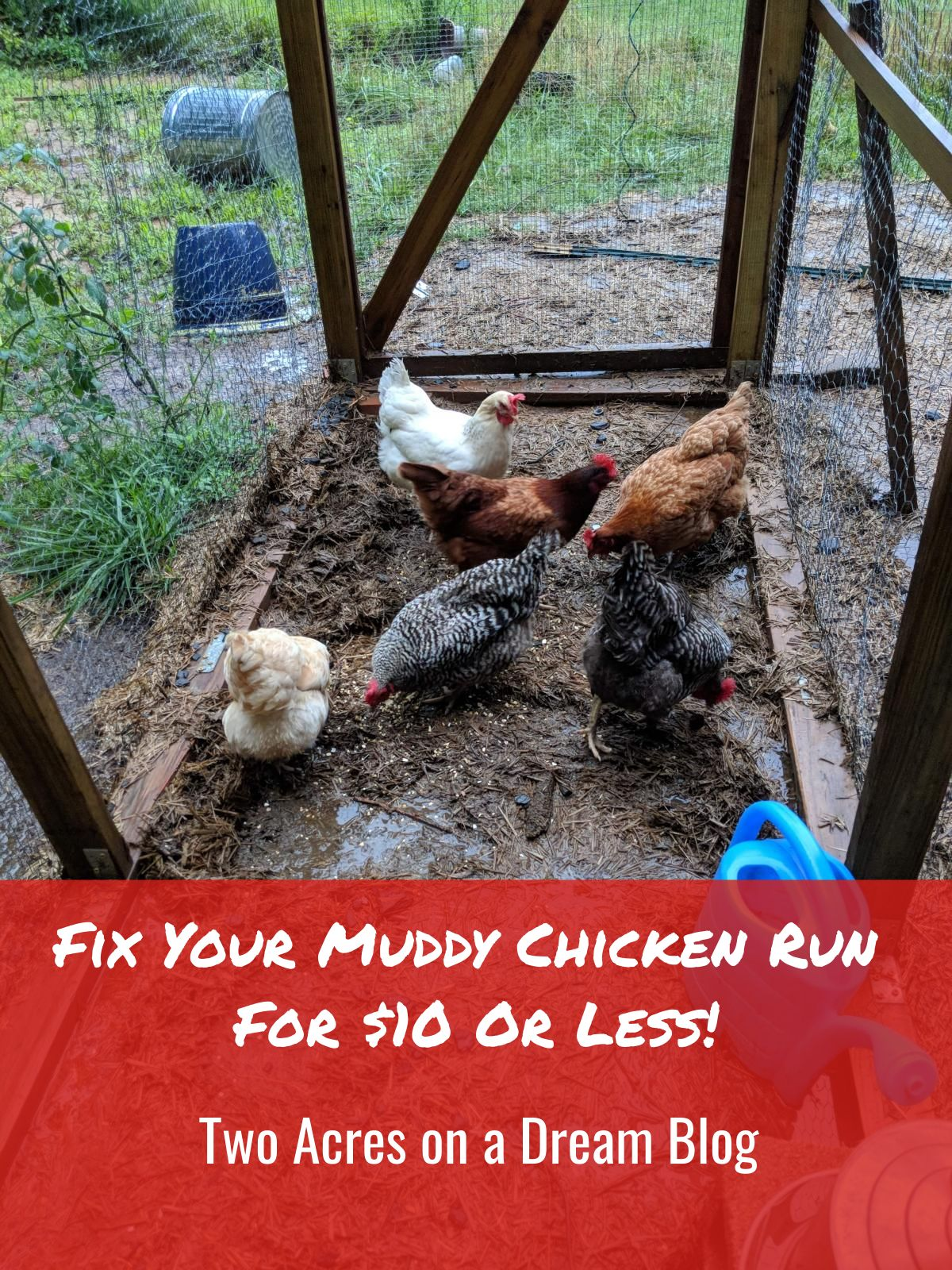 muddy_chicken_run